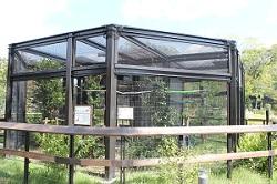 ハヤブサ・フクロウ舎