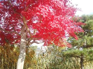 blog20141201_01