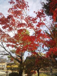 blog20141201_02